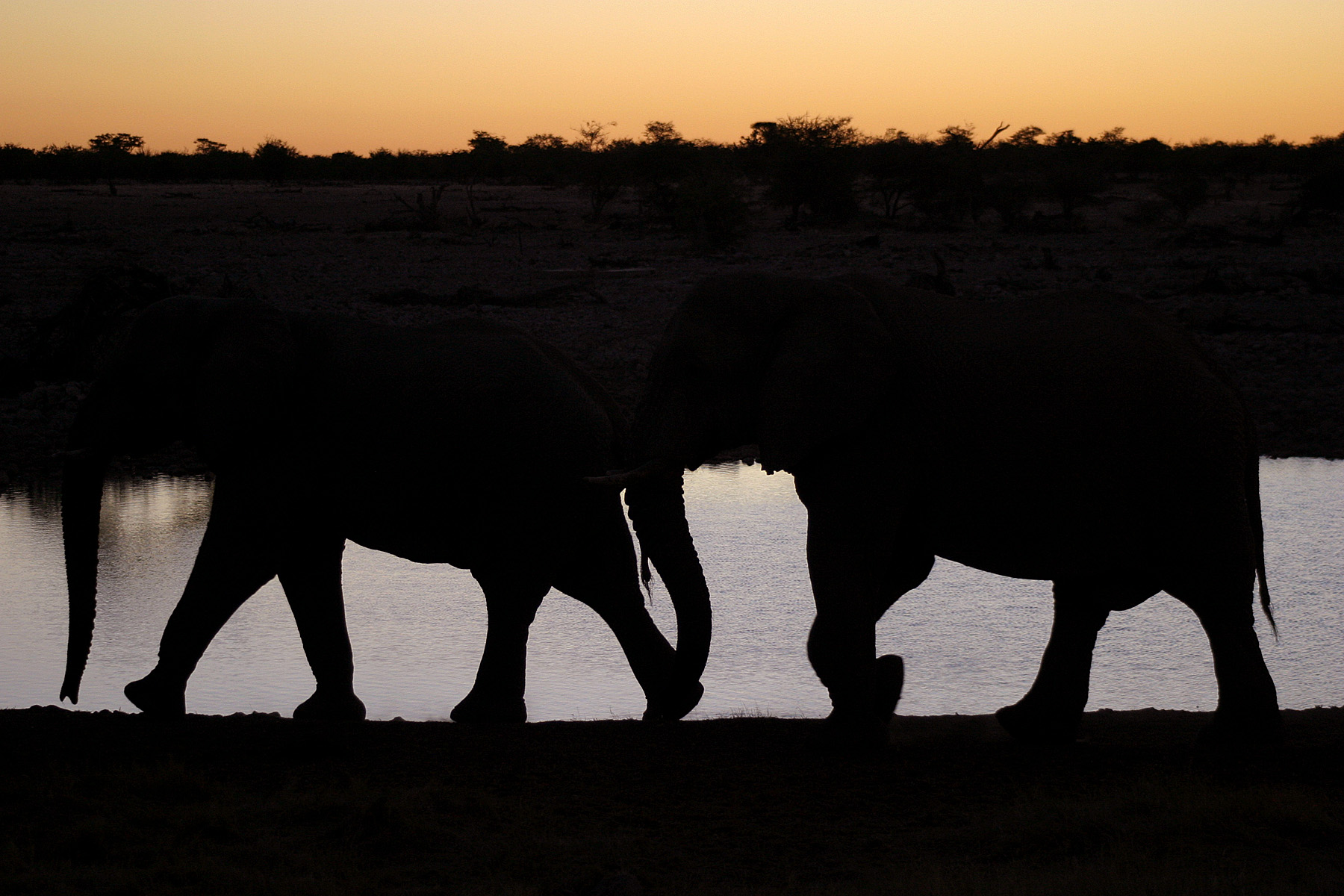elefanter2